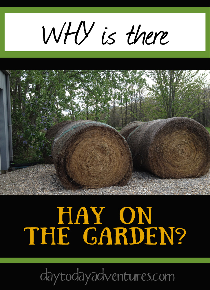 Our experiment with putting hay on the garden as deep mulch - DaytoDayAdventures.com
