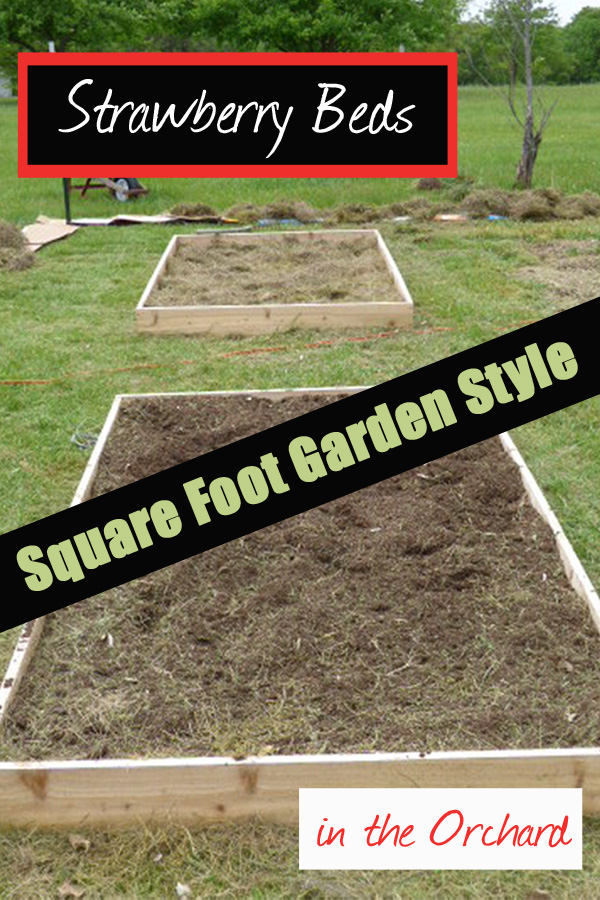 Need some beds?  Square Foot gardens do a great job in creating strawberry beds - DaytoDayAdventures.com