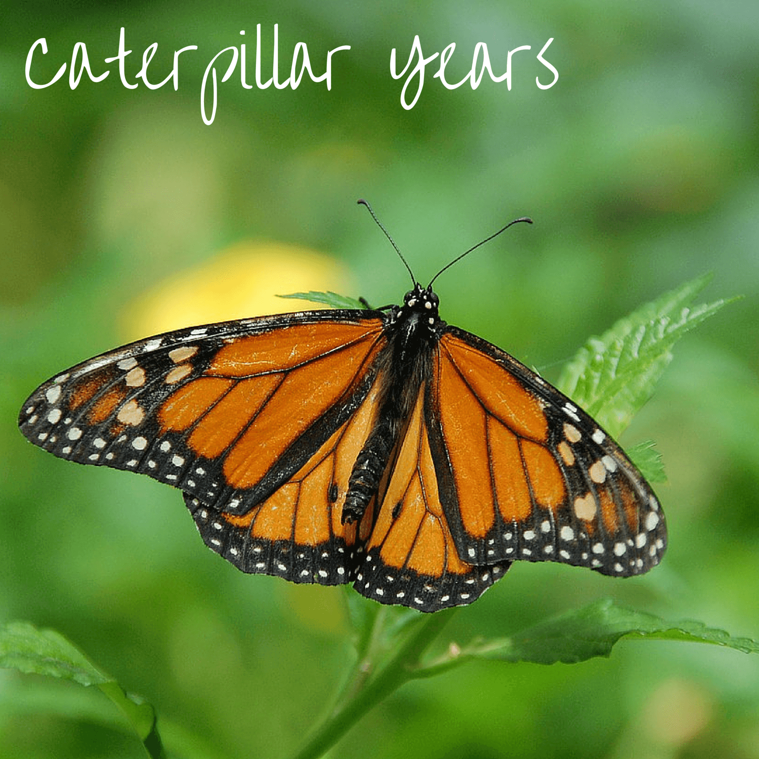 Our children grow so fast.  They are living their caterpillar years before they change and fly away. - DaytoDayAdventures.com