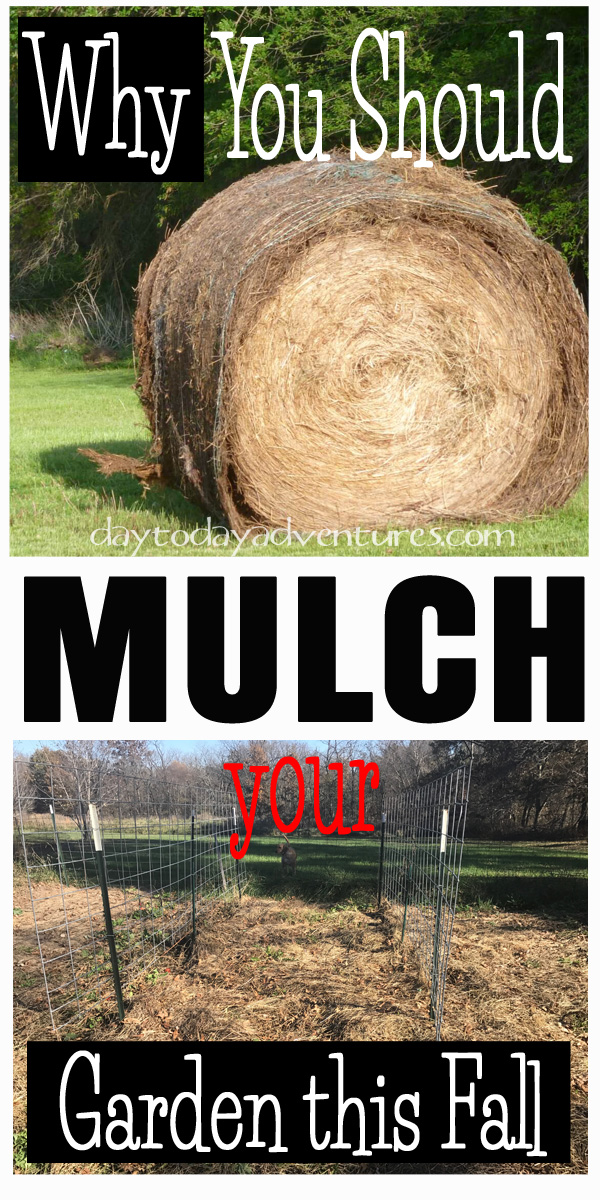 Want fewer weeds and richer soil?  You should be putting a layer of mulch on your garden this fall!  - DaytoDayAdventures.com