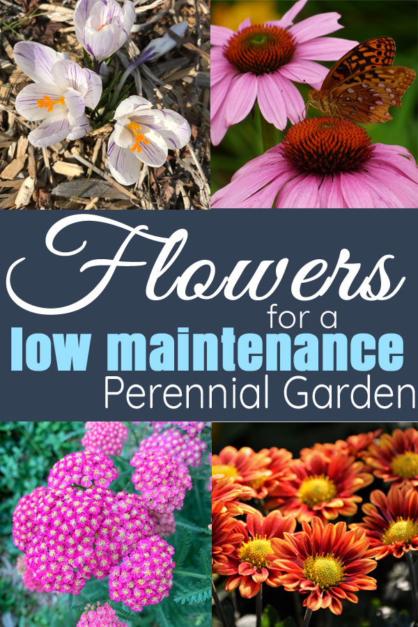 Flowers for an all season low maintenance perennial flower bed