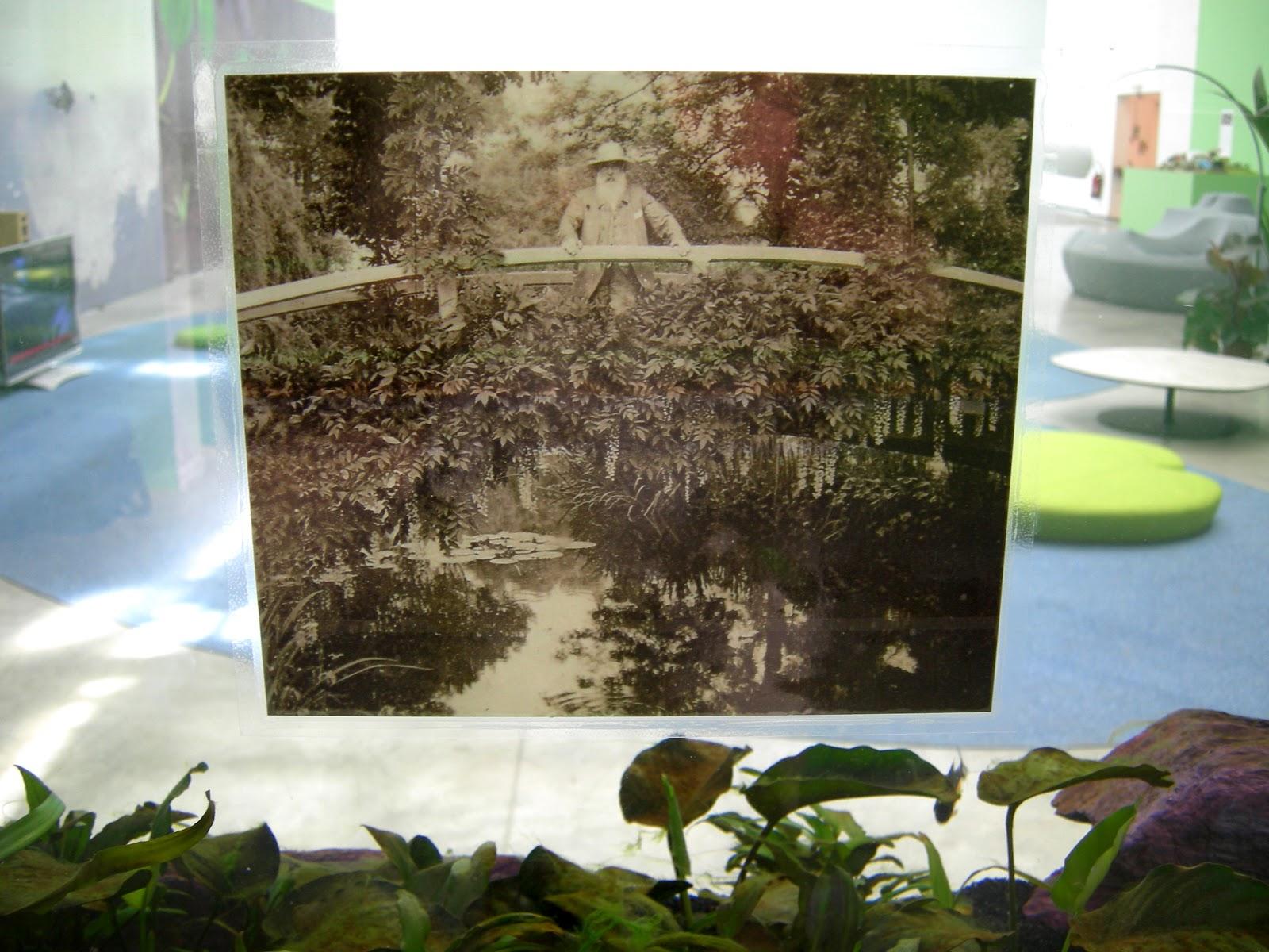 Monet's piranha soup 8 (Piranha's tank with Monet).jpg