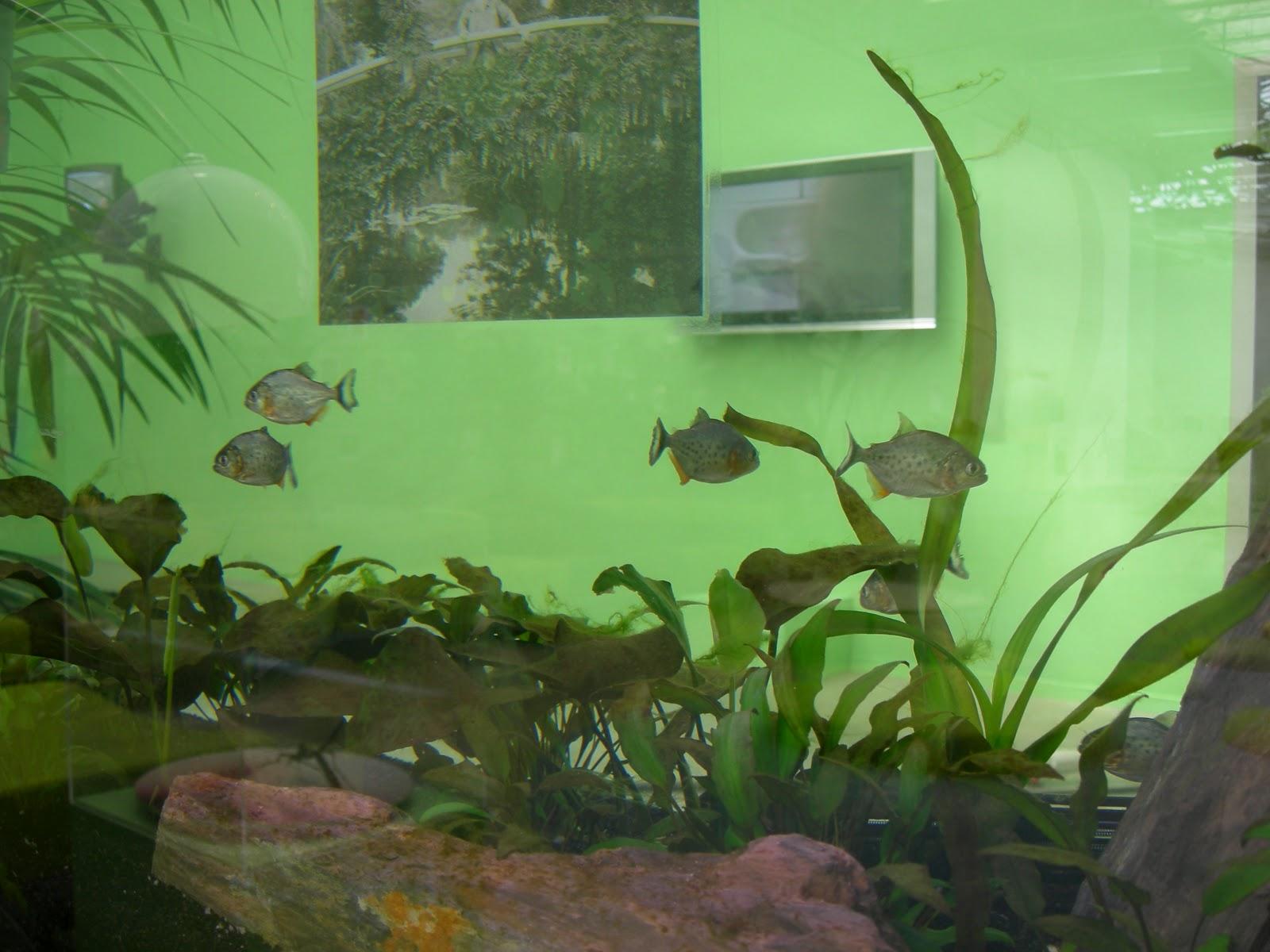 Monet's Piranha Soup 1.jpg