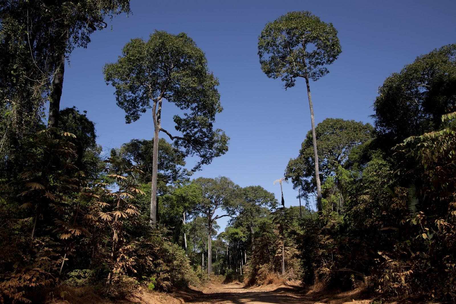 Roads of Amazonia 5.jpg