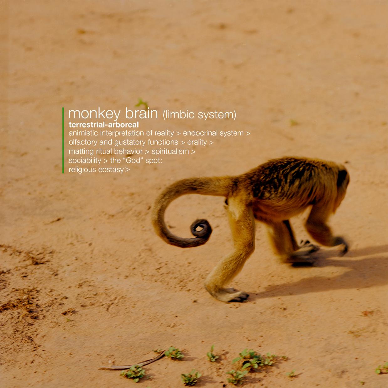 g)-monkey-brain-image-+-text-.jpg
