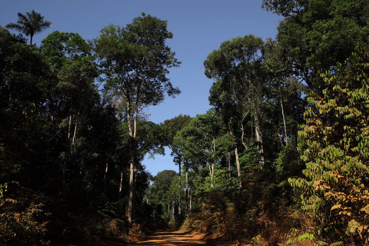 Roads-of-Amazonia-1-copy.jpg