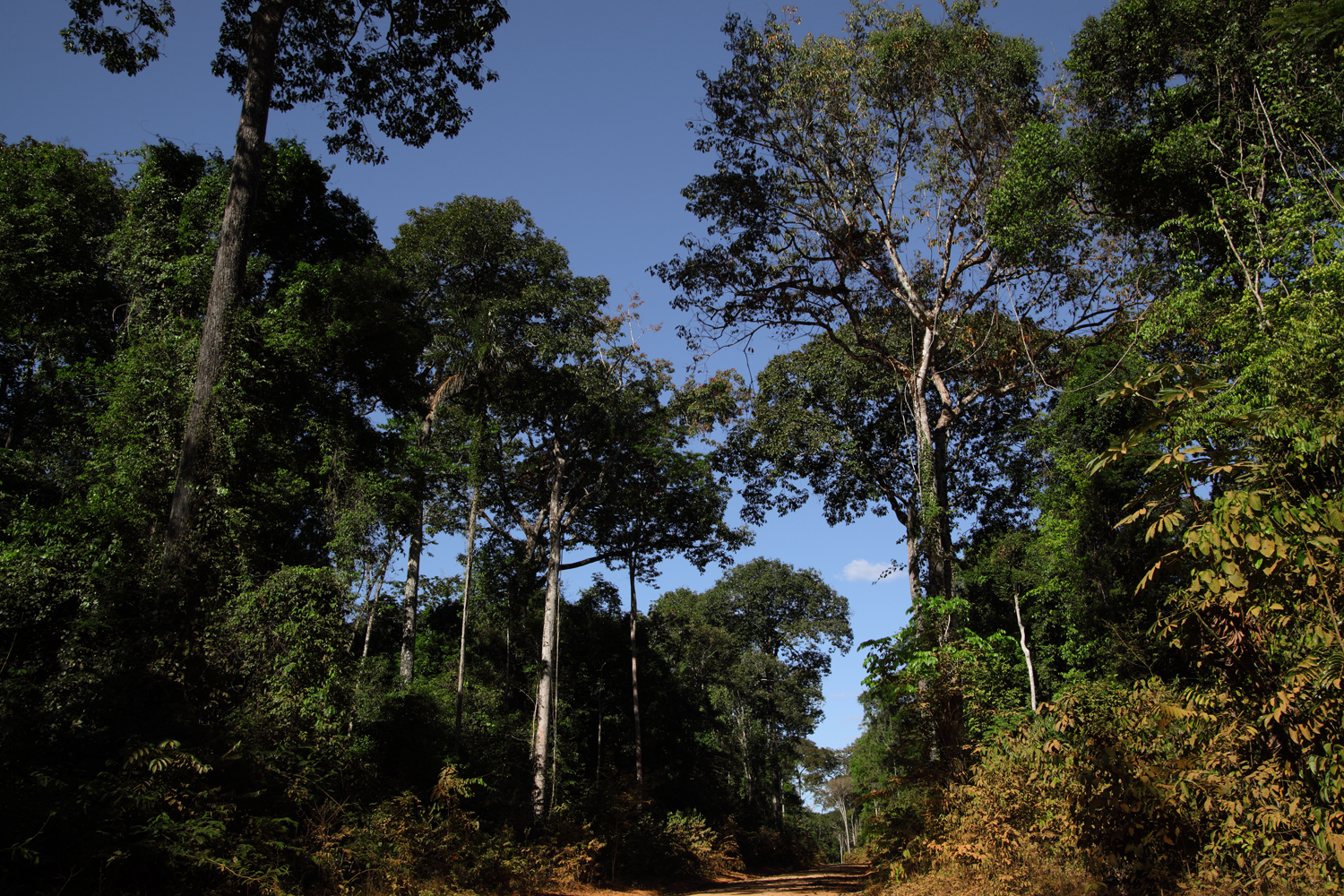 Roads-of-Amazonia-2-copy.jpg
