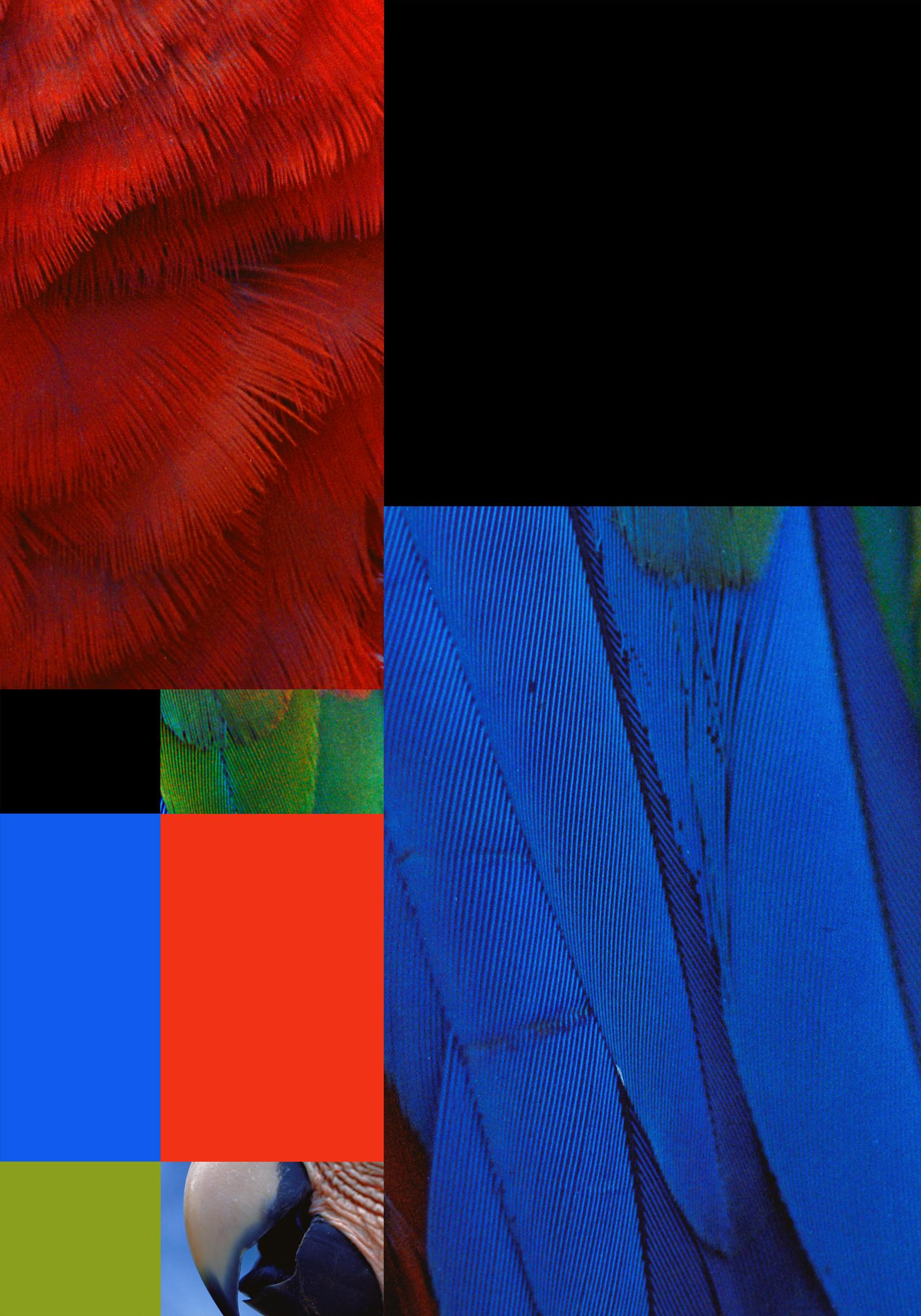 parrot color chart 8B (14x20).jpg