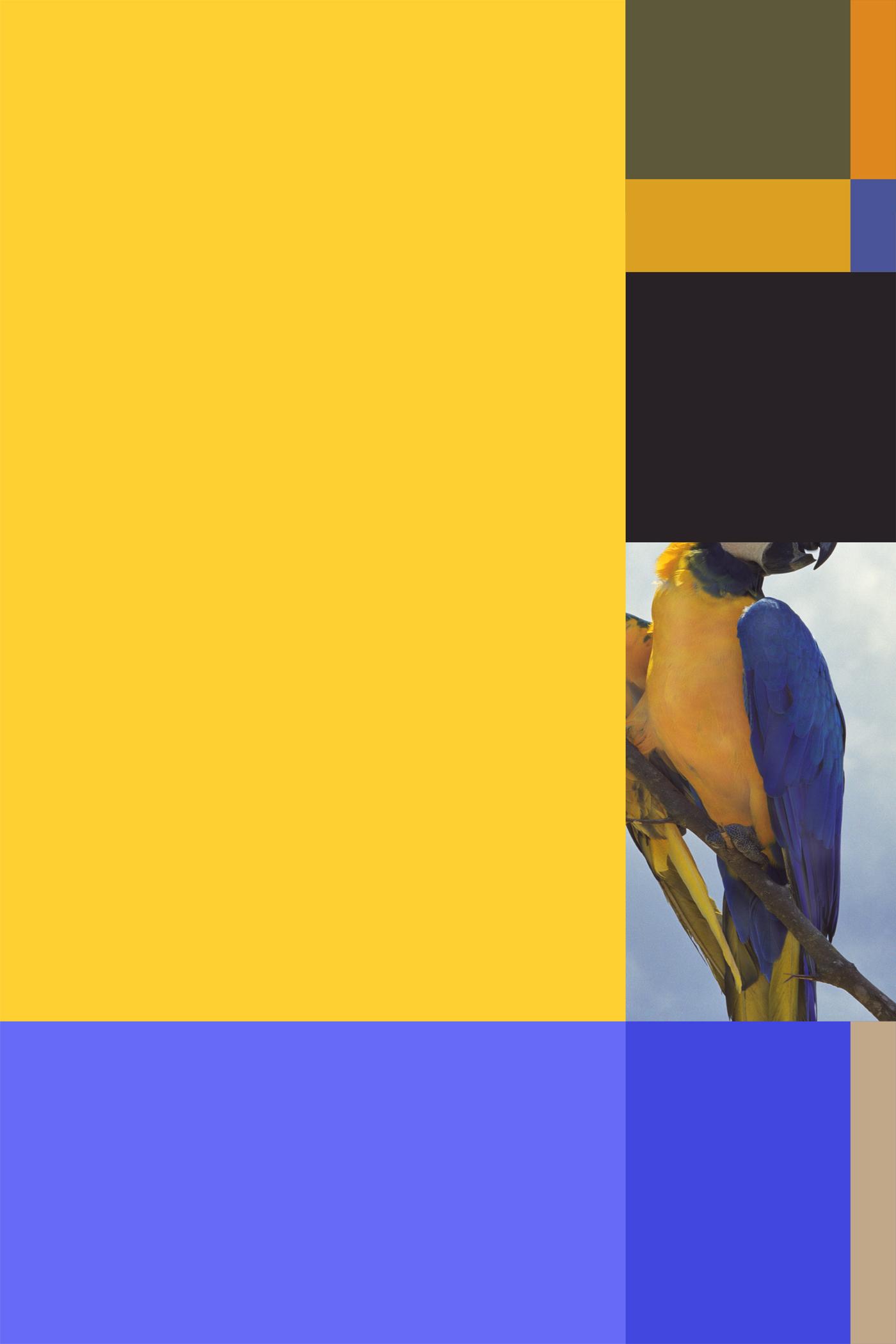 Parrot color chart #3 (38x57).jpg