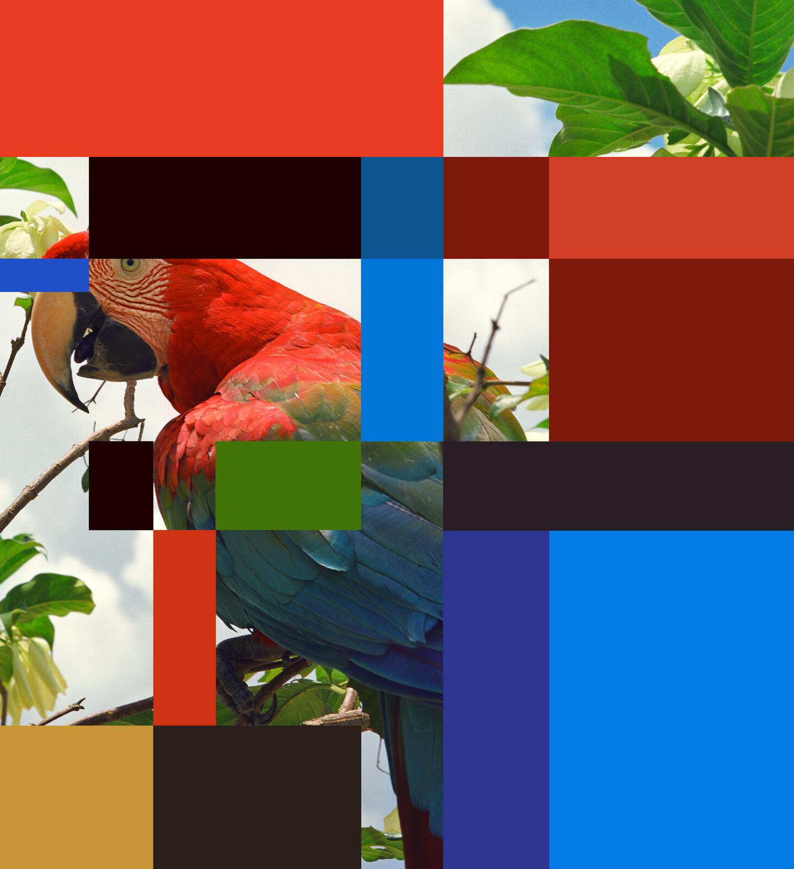parrot color chart #7B (32x35).jpg