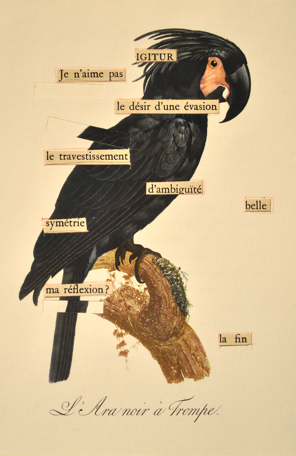 41-black-parrot-web.jpg