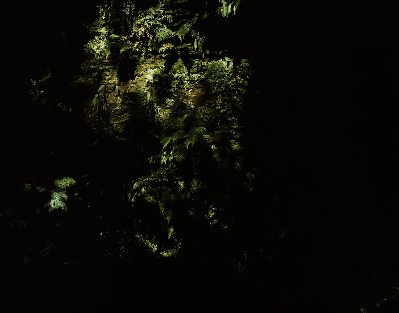 Caravaggio's moss A.jpg