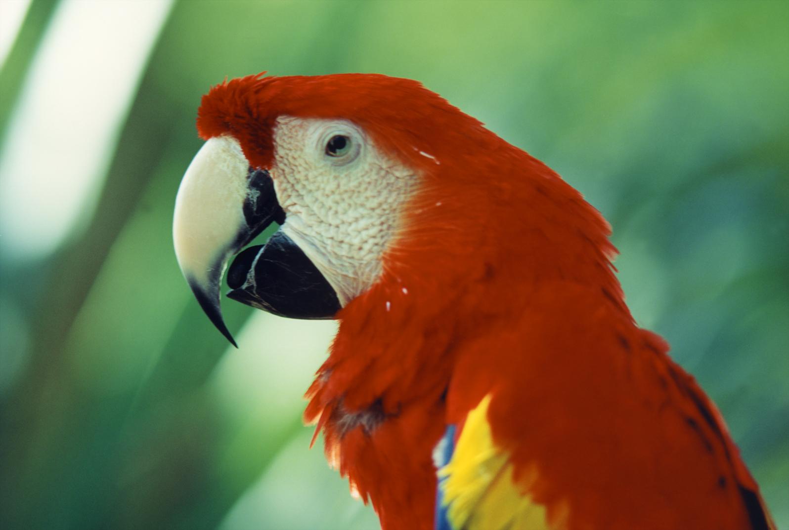 back-to-back-parrot.jpg