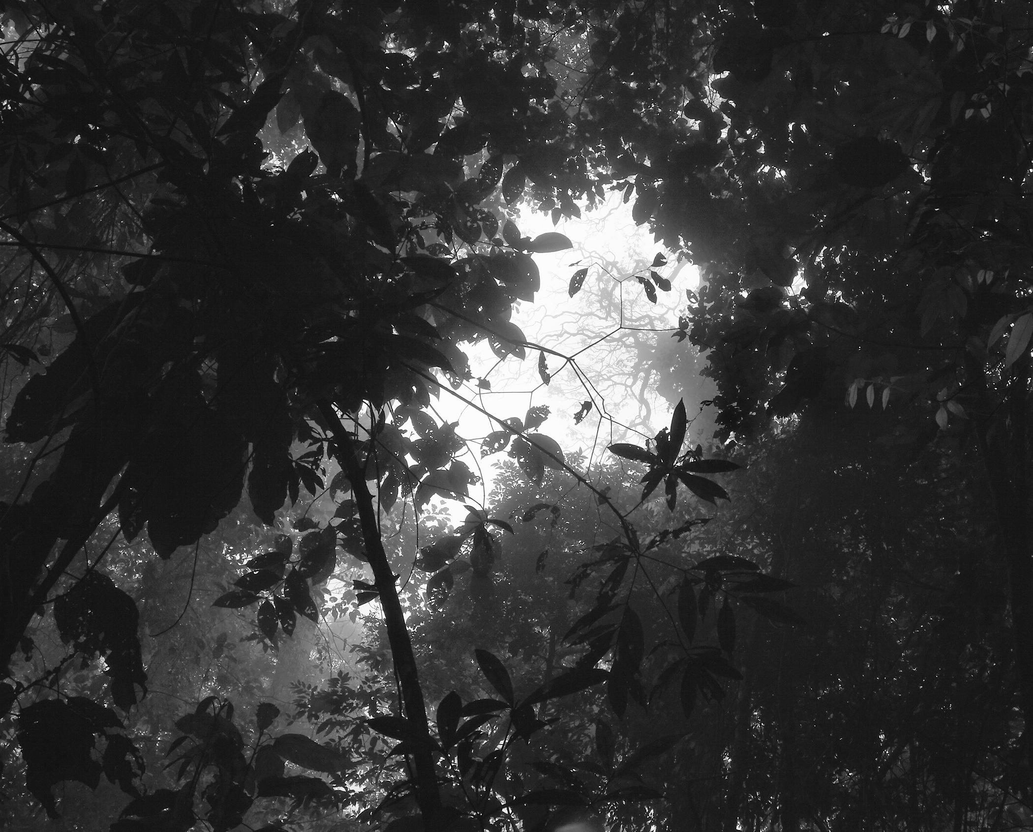 7) dark-canopy-copy.jpg