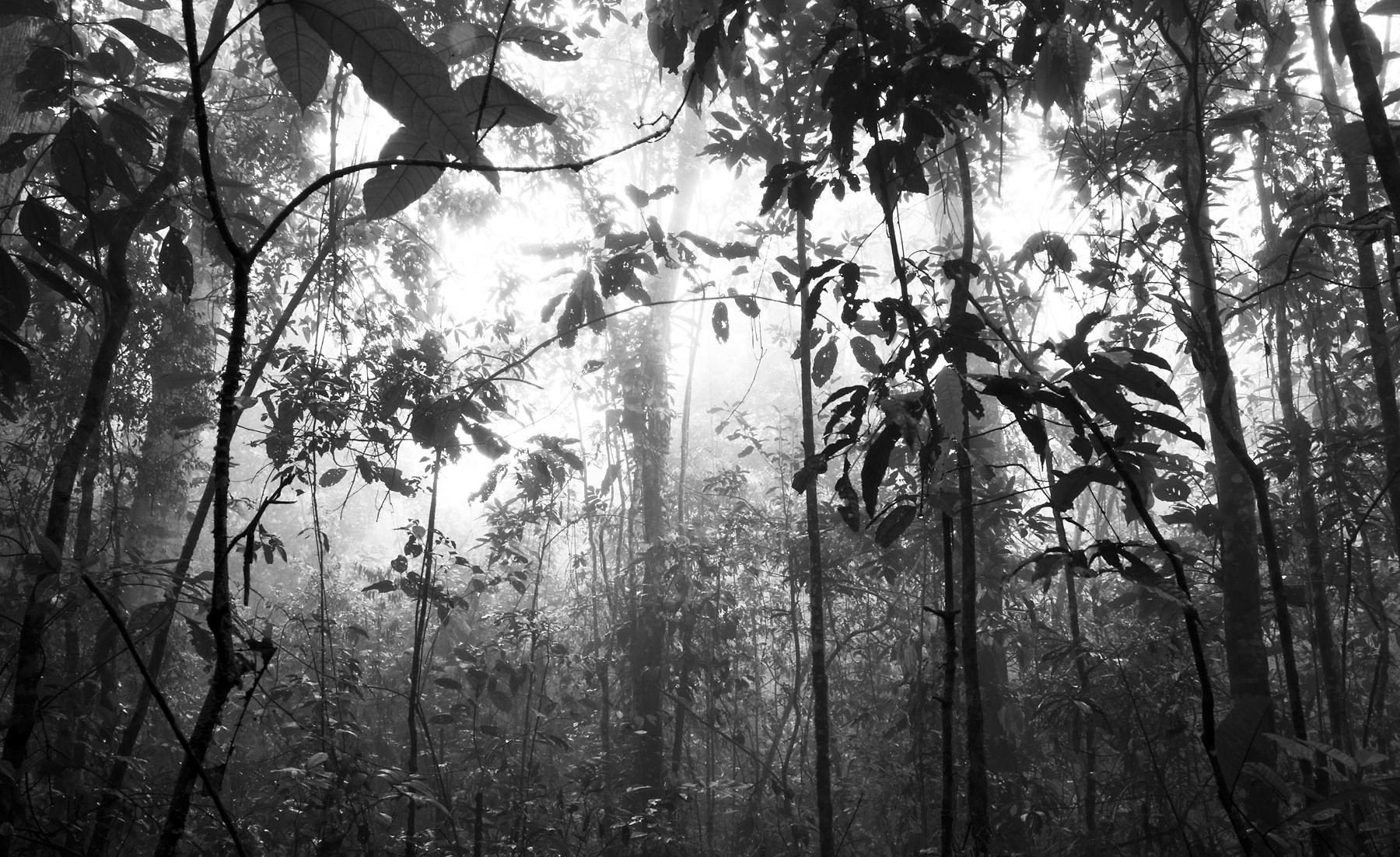 3) misty-forest-3-copy.jpg