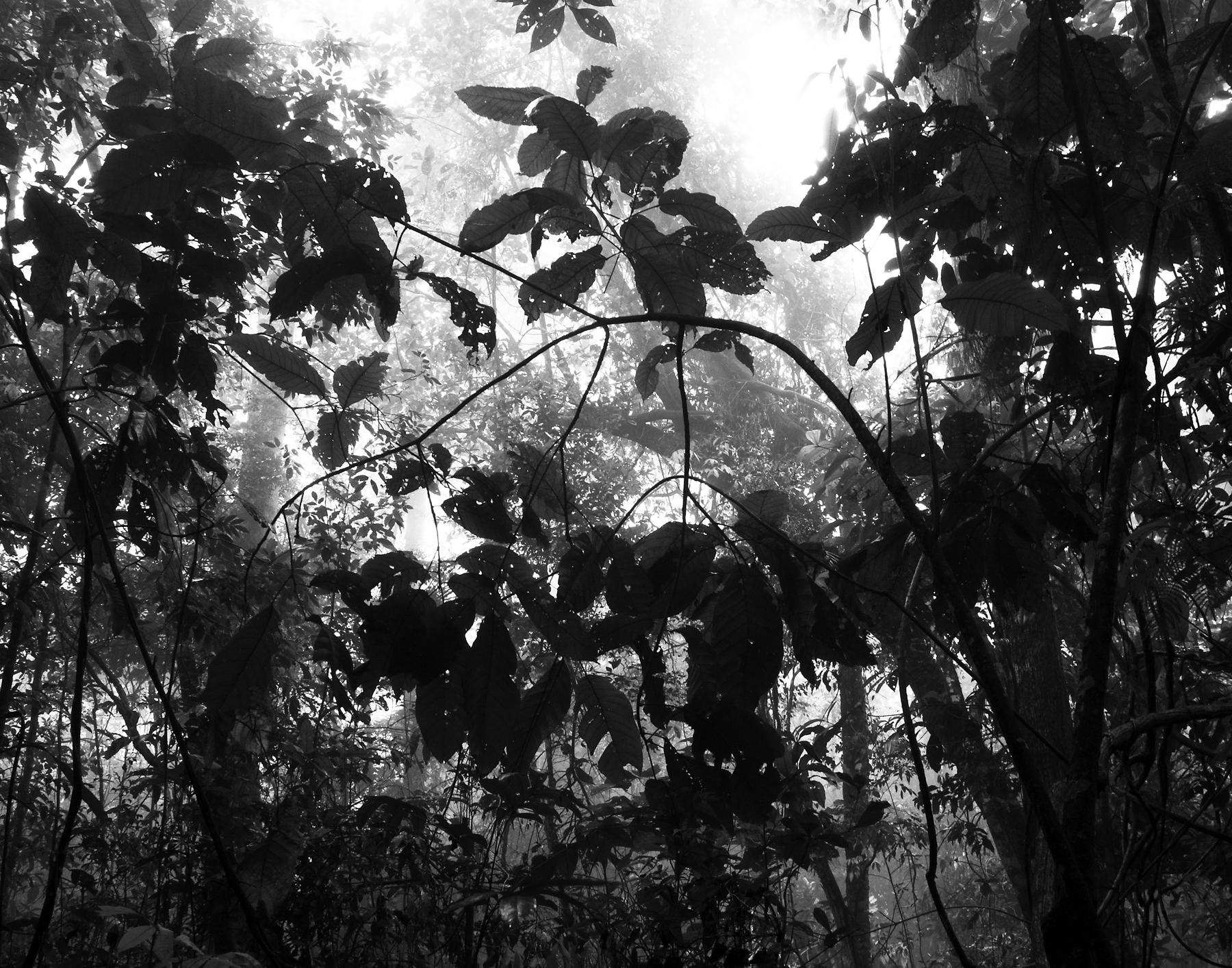 17) leaves-like-heavy-brushstrokes-copy.jpg