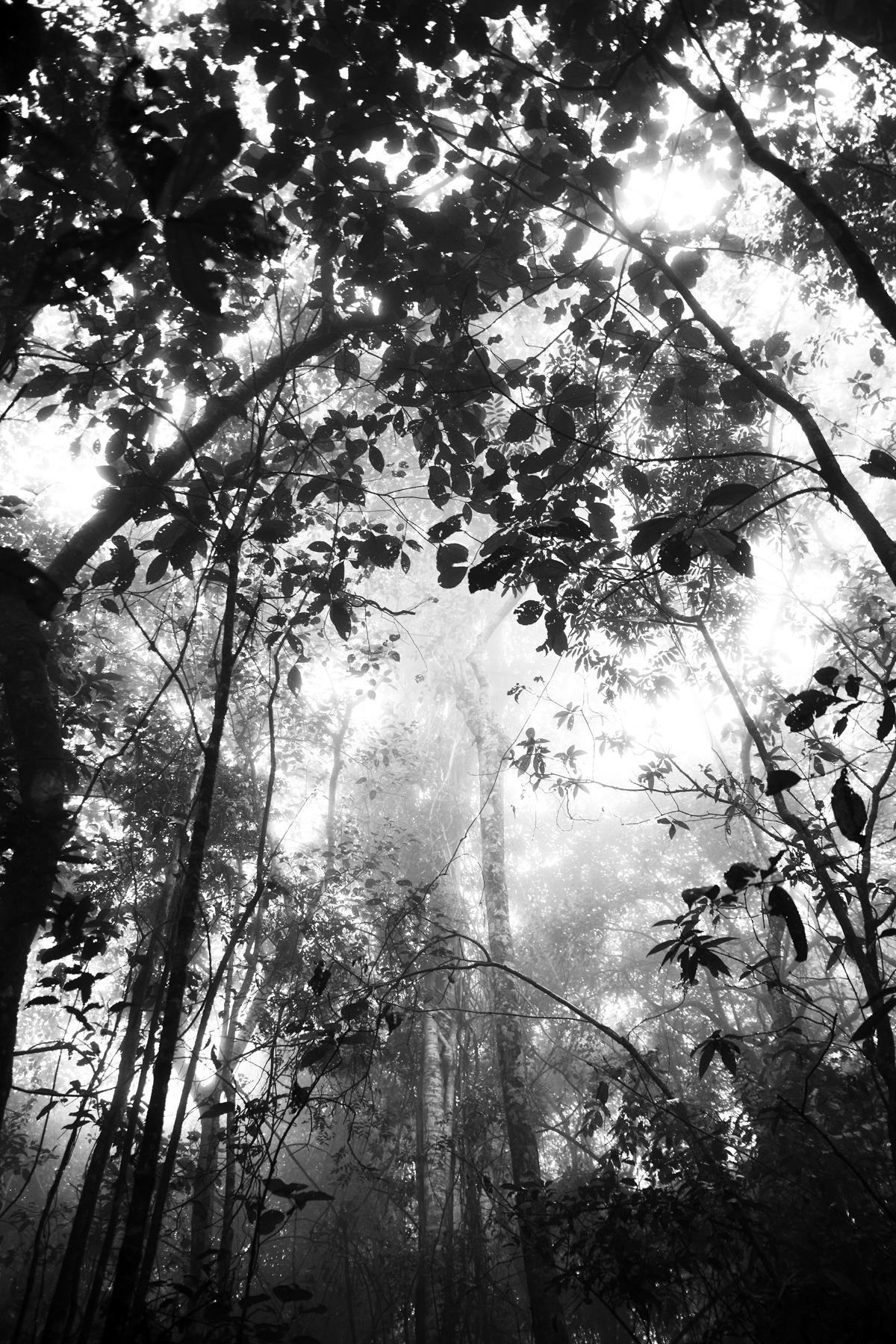 1) misty-forest-1-copy.jpg