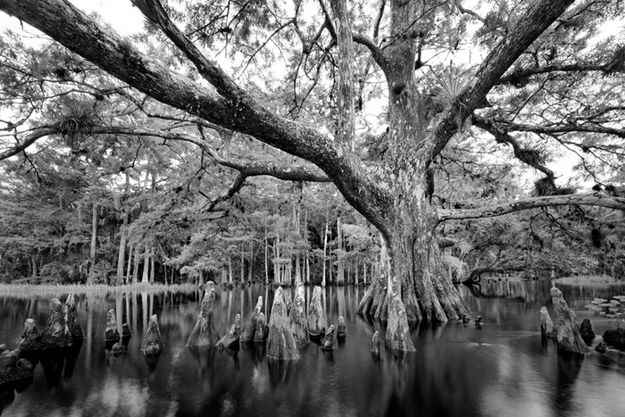 The Everglades by Clyde Butcher