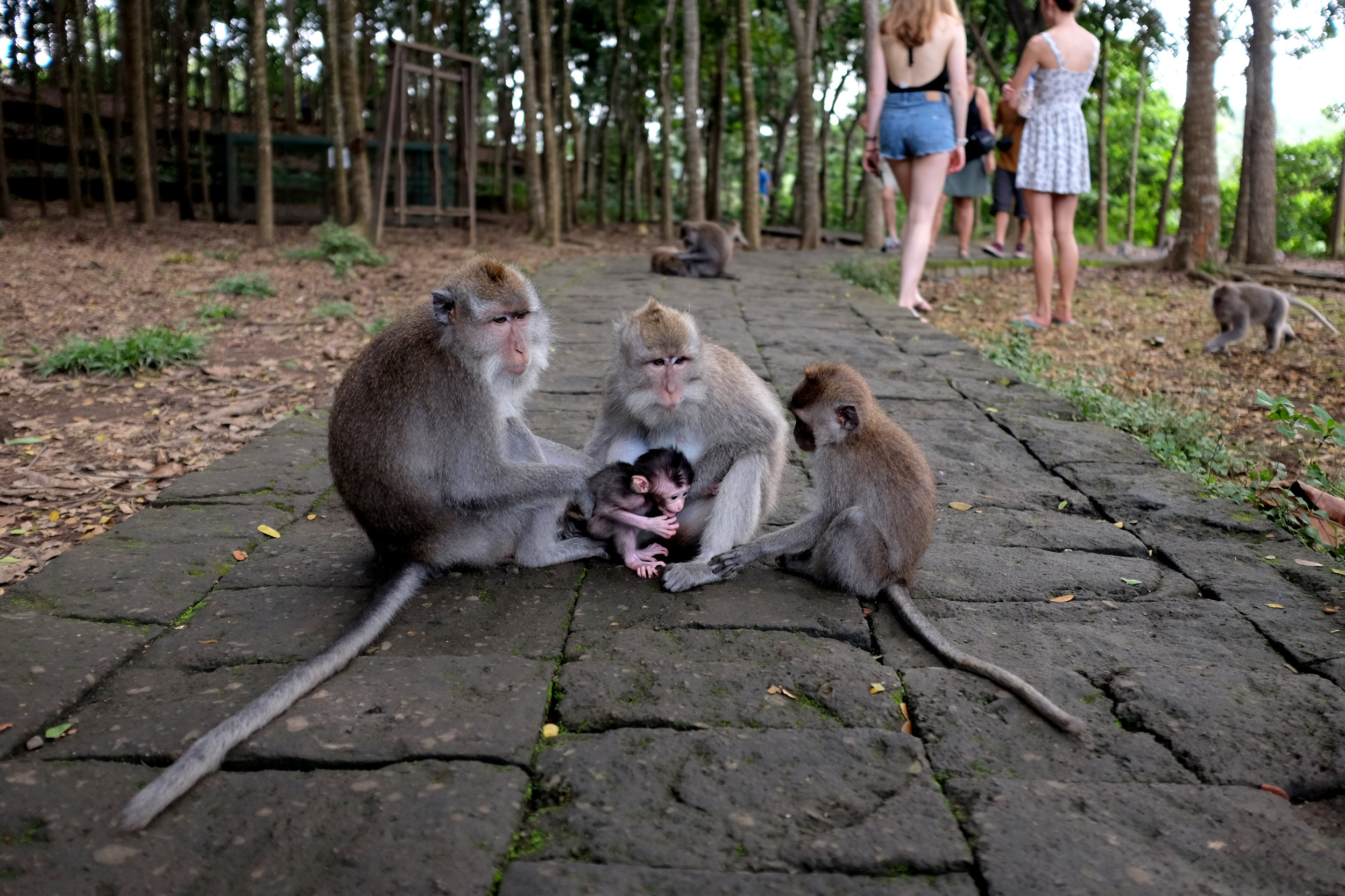 Ubud Sacred Monkey Forest | Bali, Indonesia