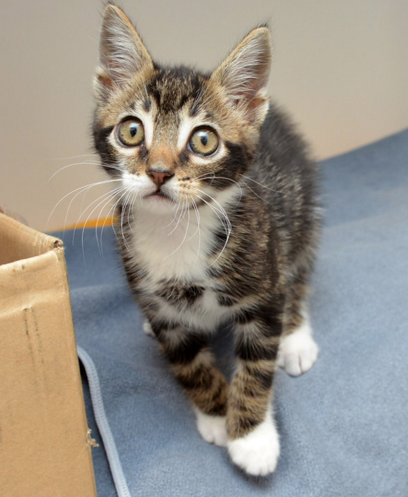 Tommy ~  2 mo. / Male
