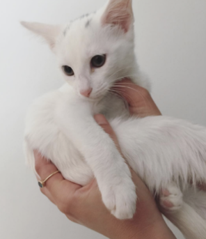 Luna ~  Baby / Female