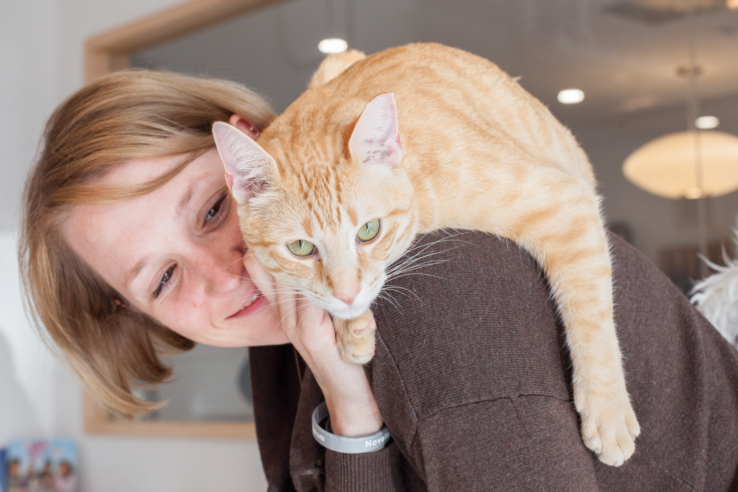 Picture of Ron (an orange cat) on the shoulders of a guest.
