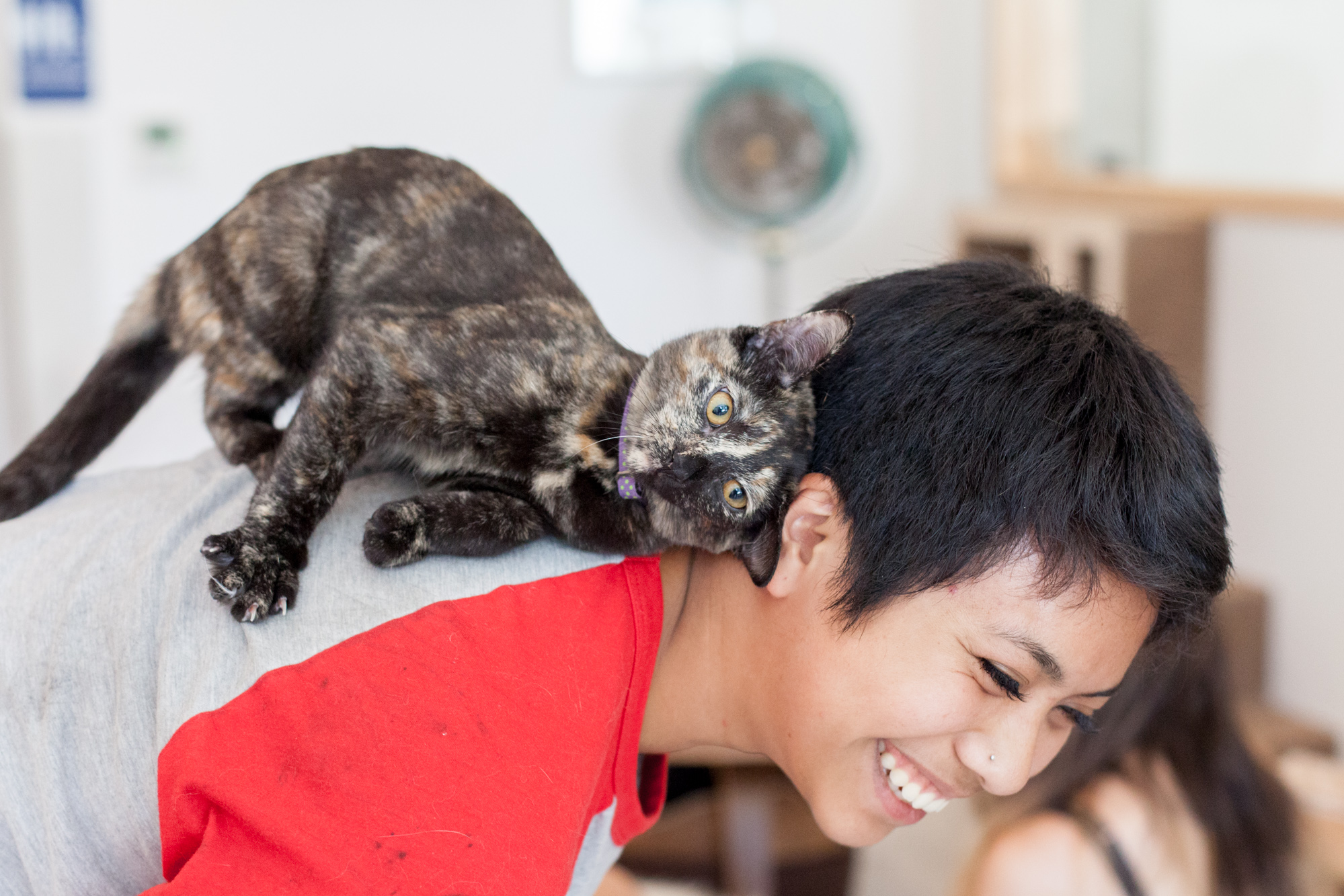 This is a picture of a tortoise shell cat on person's back. The person is smiling.