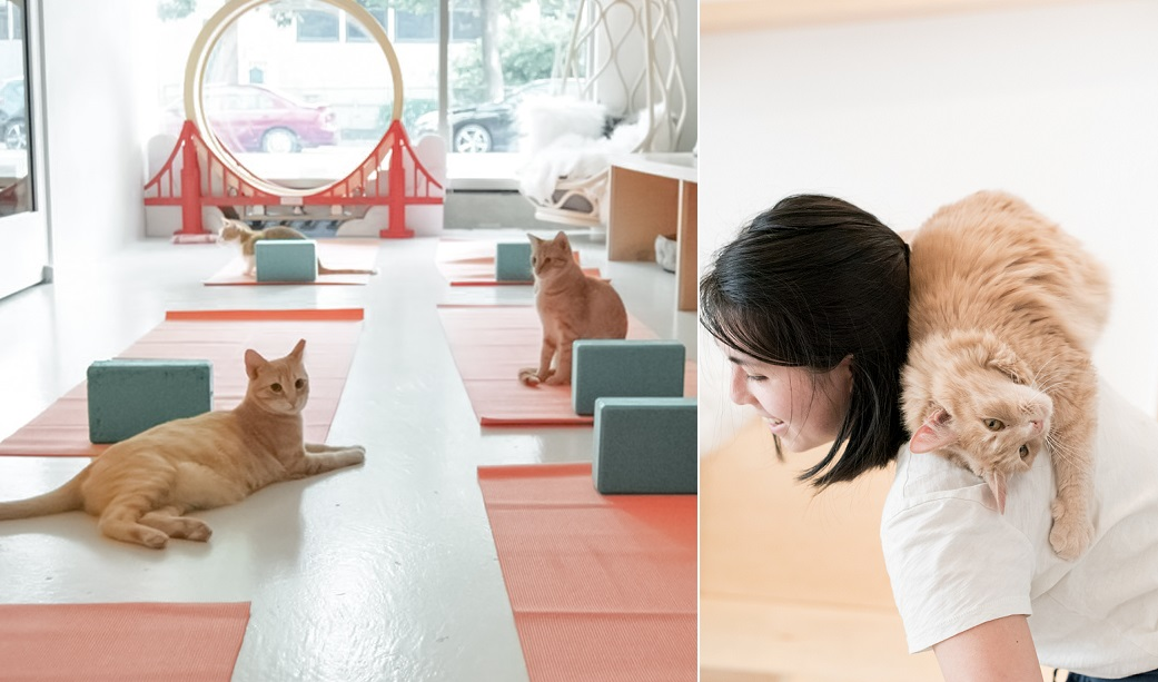 cat yoga - three cats on yoga mats and a woman with a cat on her back.jpg