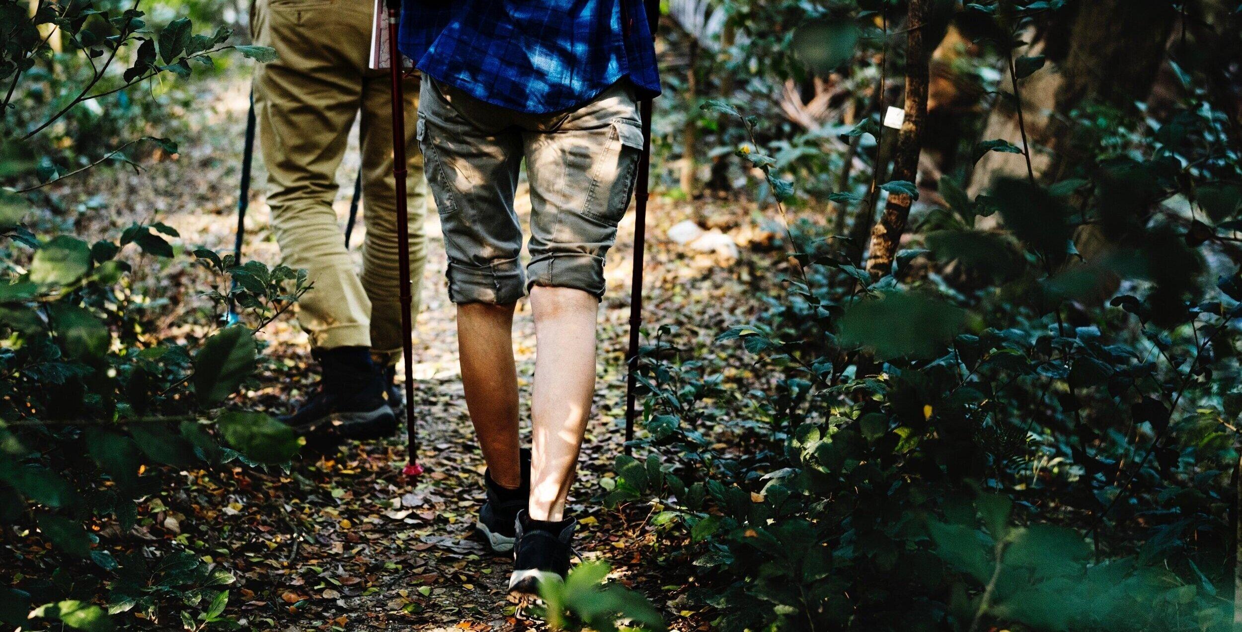 hiking%2Btrail.jpg