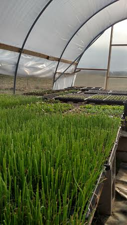 7 greenhouse.jpg
