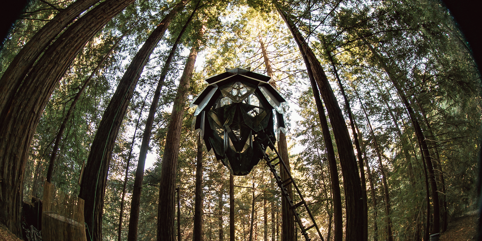 pinecone-series-guayaki-third-eye-o2-treehouse-forest-6.jpg