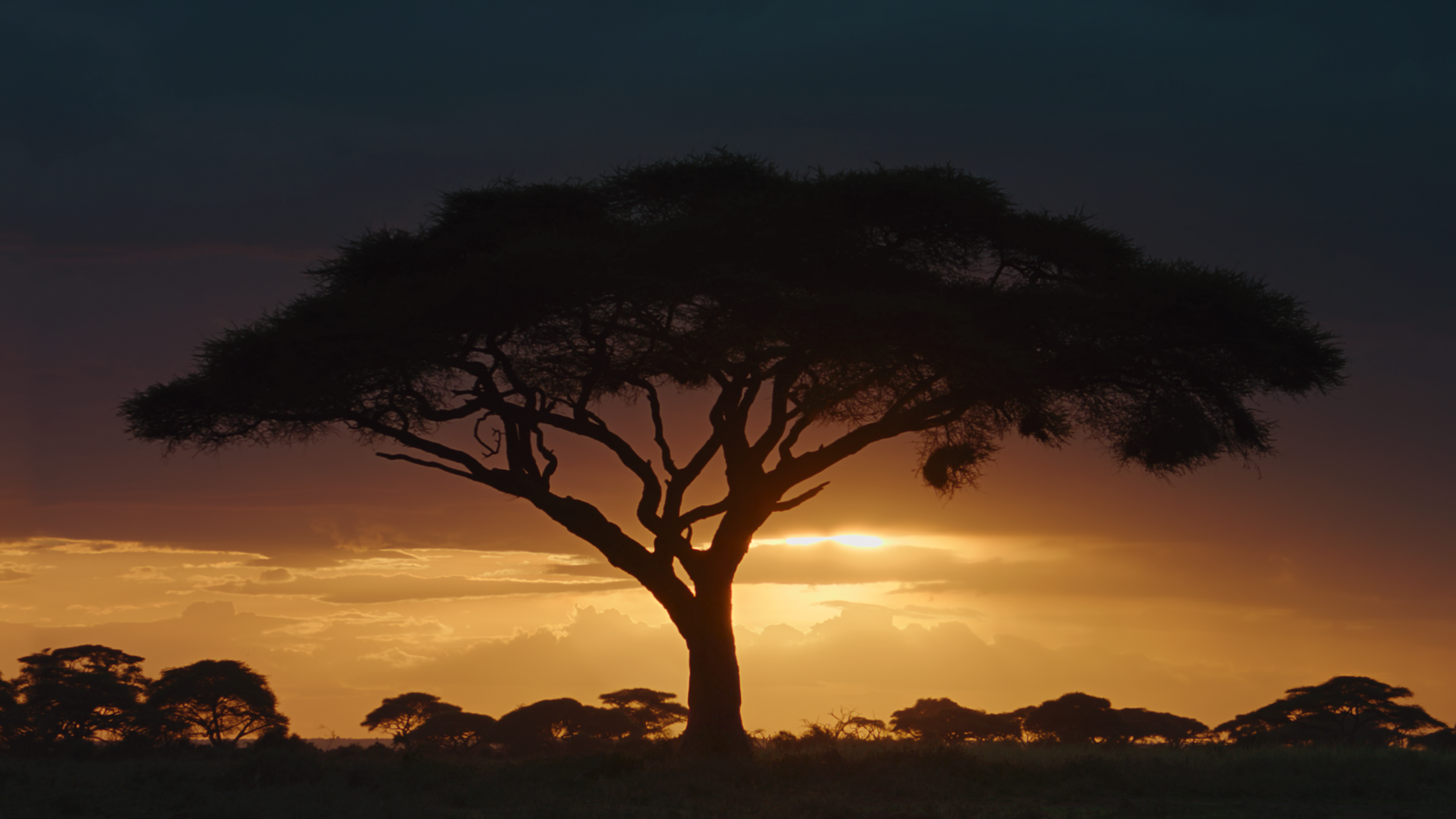 Sunset in Kenya, Africa.