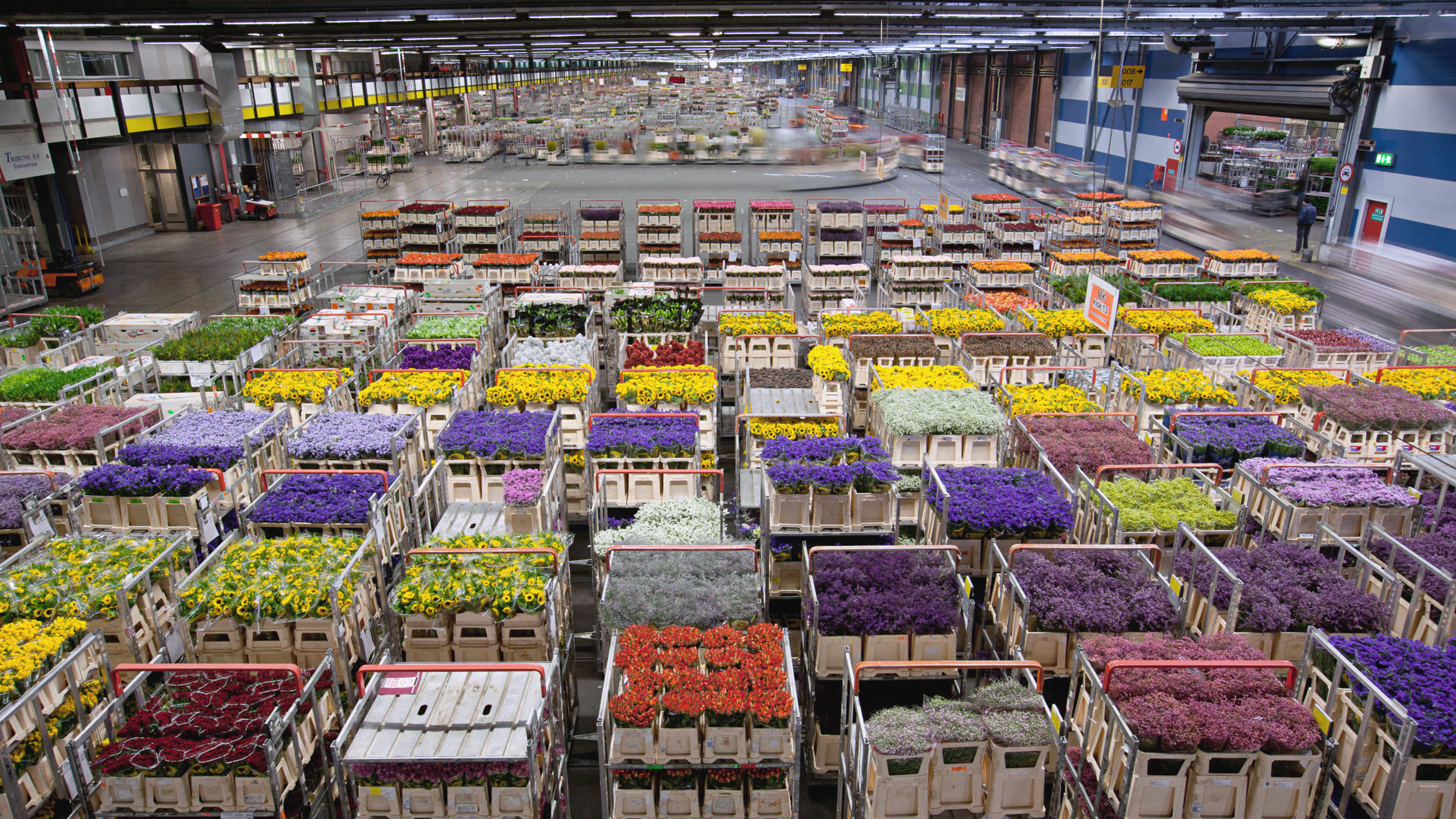Flowers being prepped for shipment in Aalsmeer, Netherlands.