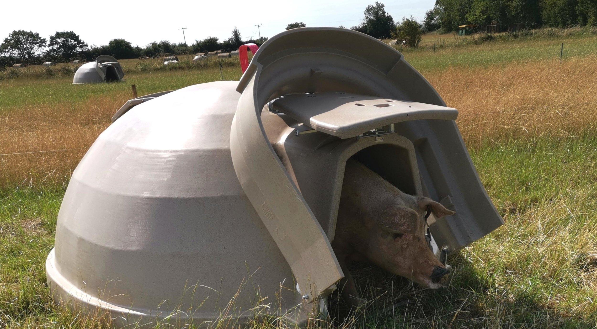 Aardvark xl 4.jpg