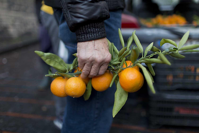 citrus-tom-moggach.jpg