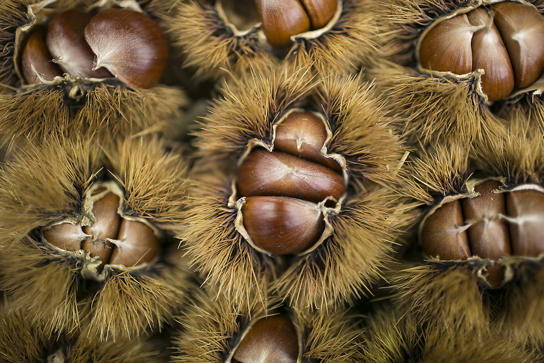 chestnuts-tom-moggach.jpg