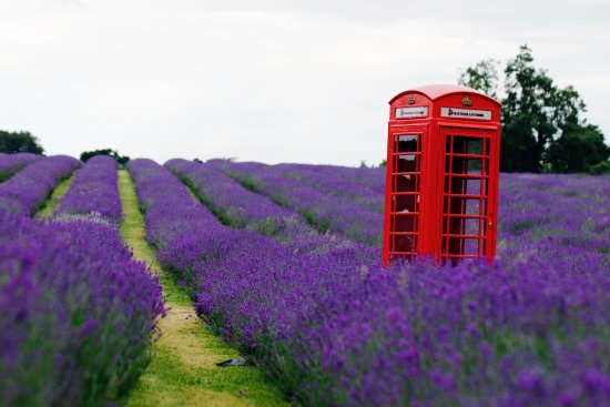 purple-divine.jpg