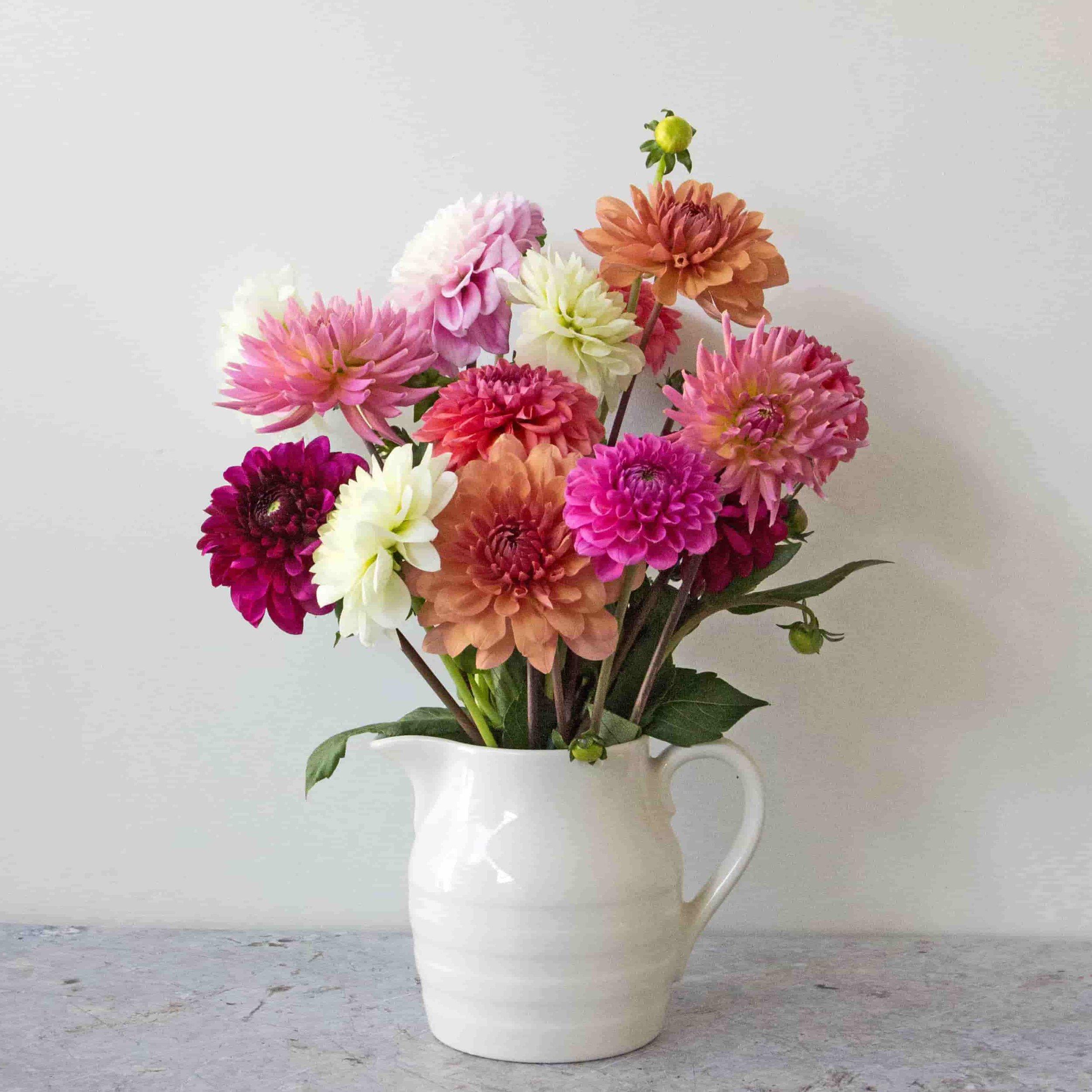 dahlias-vase-close-up-1x1-min.jpg
