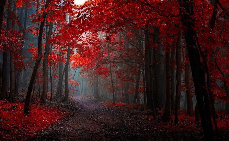 autumn-scenery.jpg