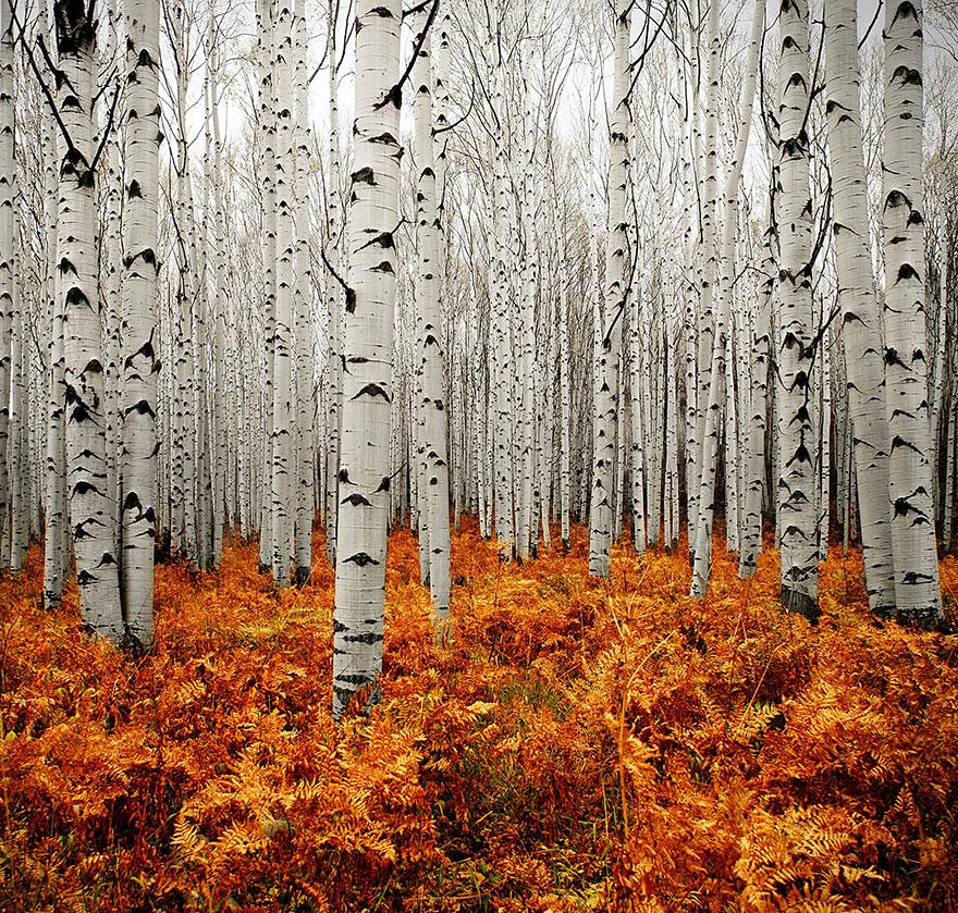 autumn-photography-2-18__880.jpg