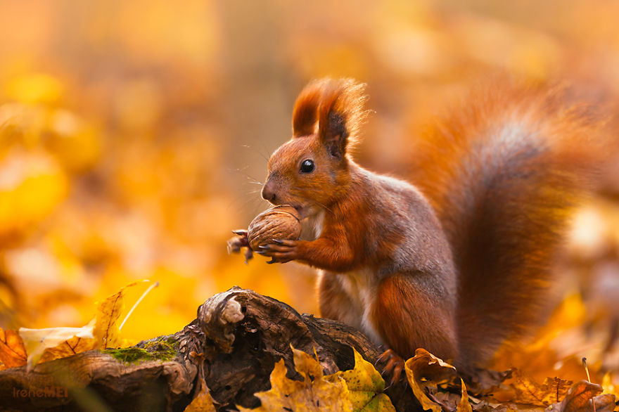autumn-photography-nature-26__880.jpg