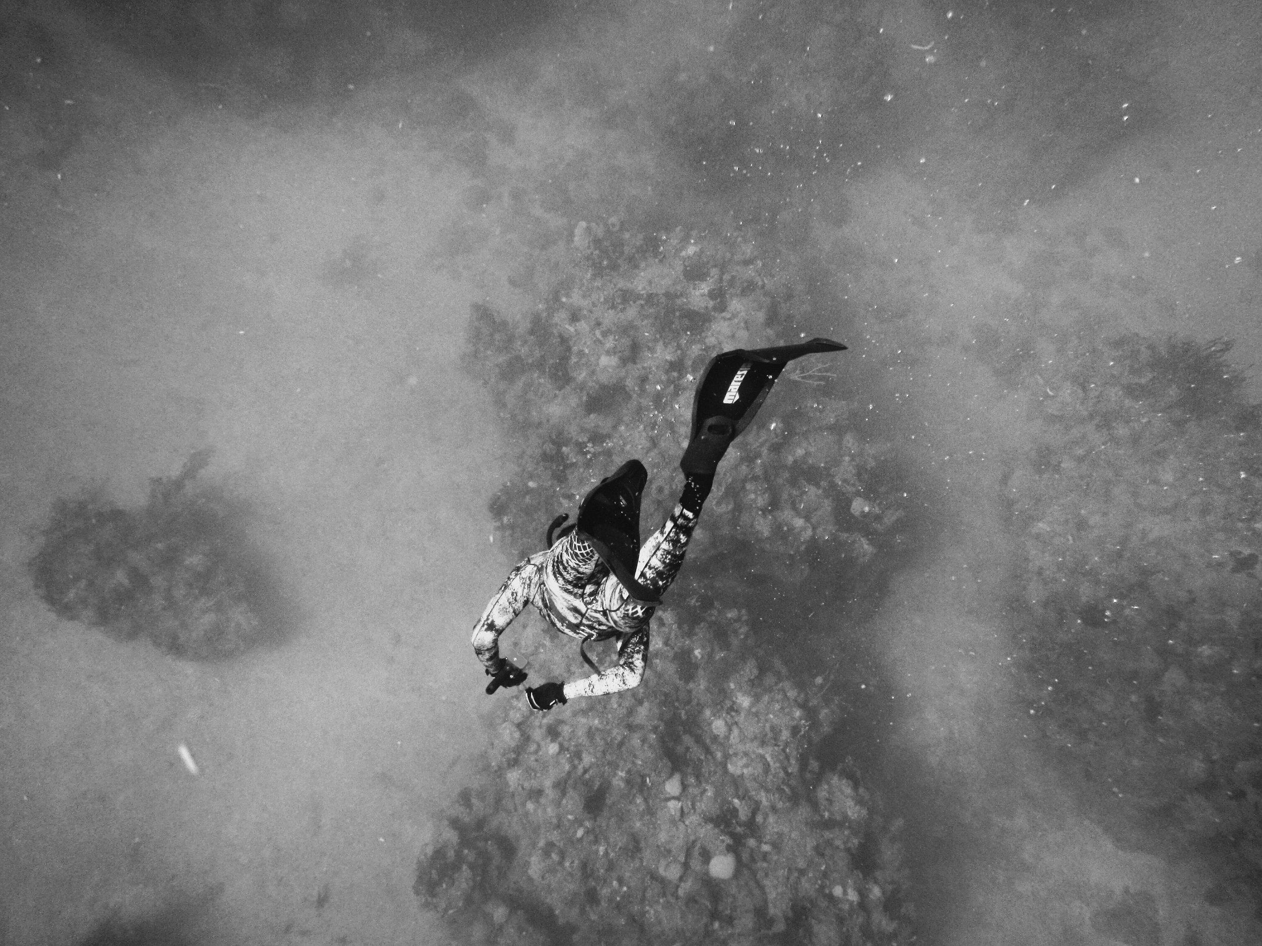 Dykketurar// Diving trips - 1. september (Dagstur)Til Lyngstølvatnet med Sjøspretten20 –22. septemberTil Florø med Sogndal Dykkarklubb25 – 27. oktoberTil Skjerjehamn med Sogndal DykkarklubbI løpet av januarTil Flåm (Vrakdykk)