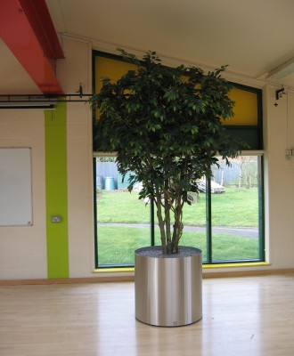 9ft-Ficus-in-Stainless-Steel-Planter-2-330x400.jpg