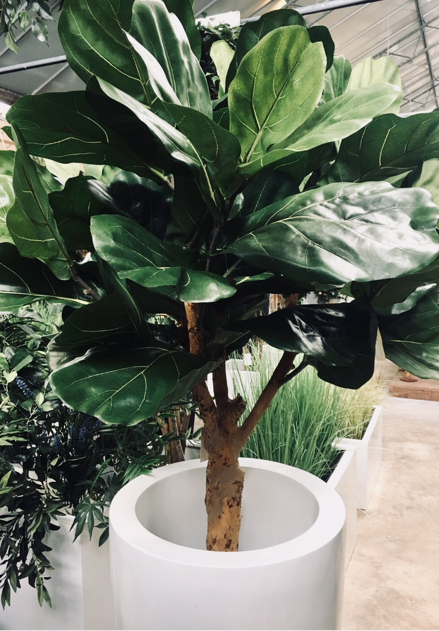 The stunning 'Fake It' fiddle ficus - for more details please contact the 'Fake It' team