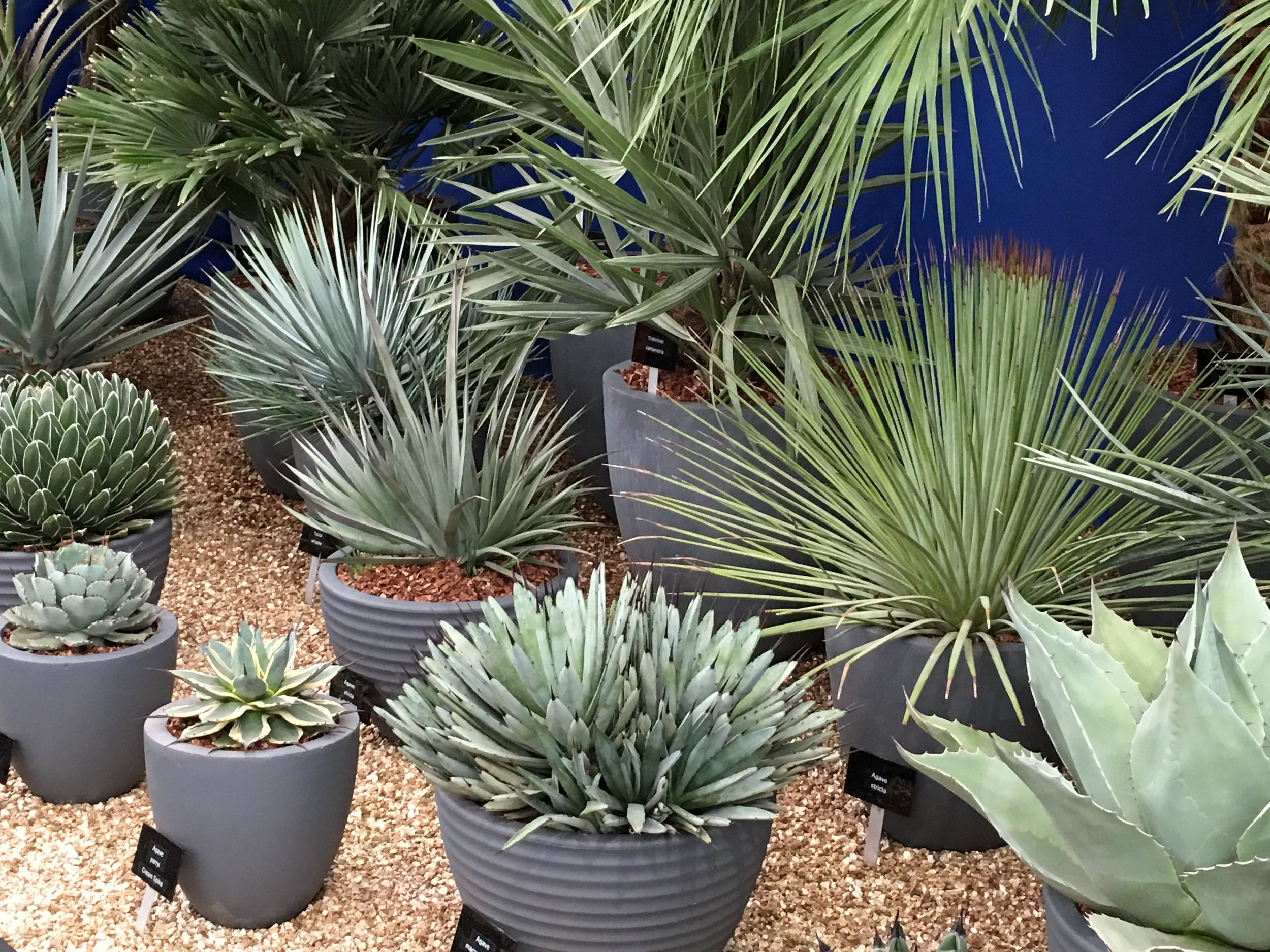 From cacti to succulents, indoor houseplants are still a key trend.