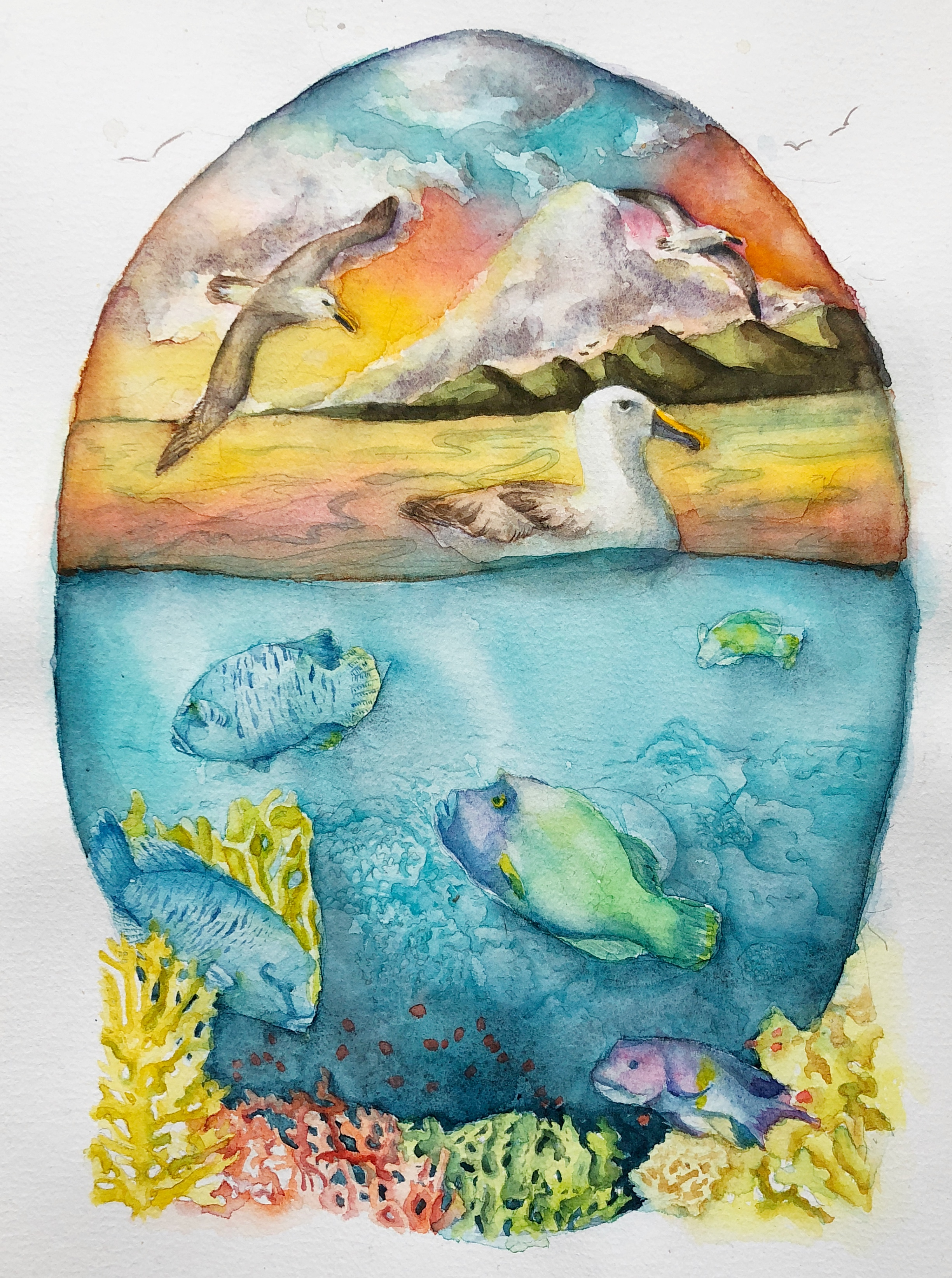 Oceans and Coasts | Animal Artists Collective