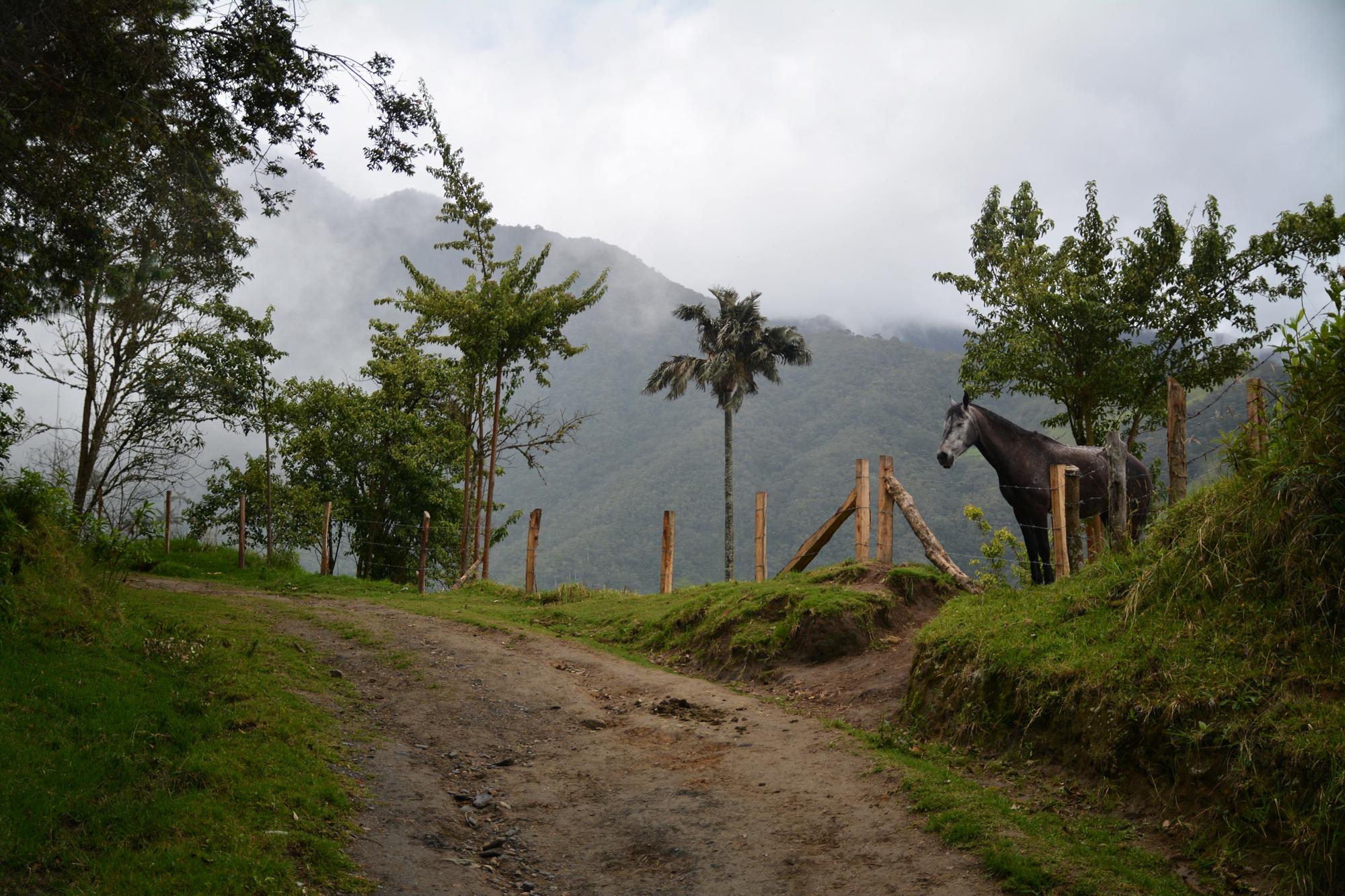Cocora Valley - Colombia