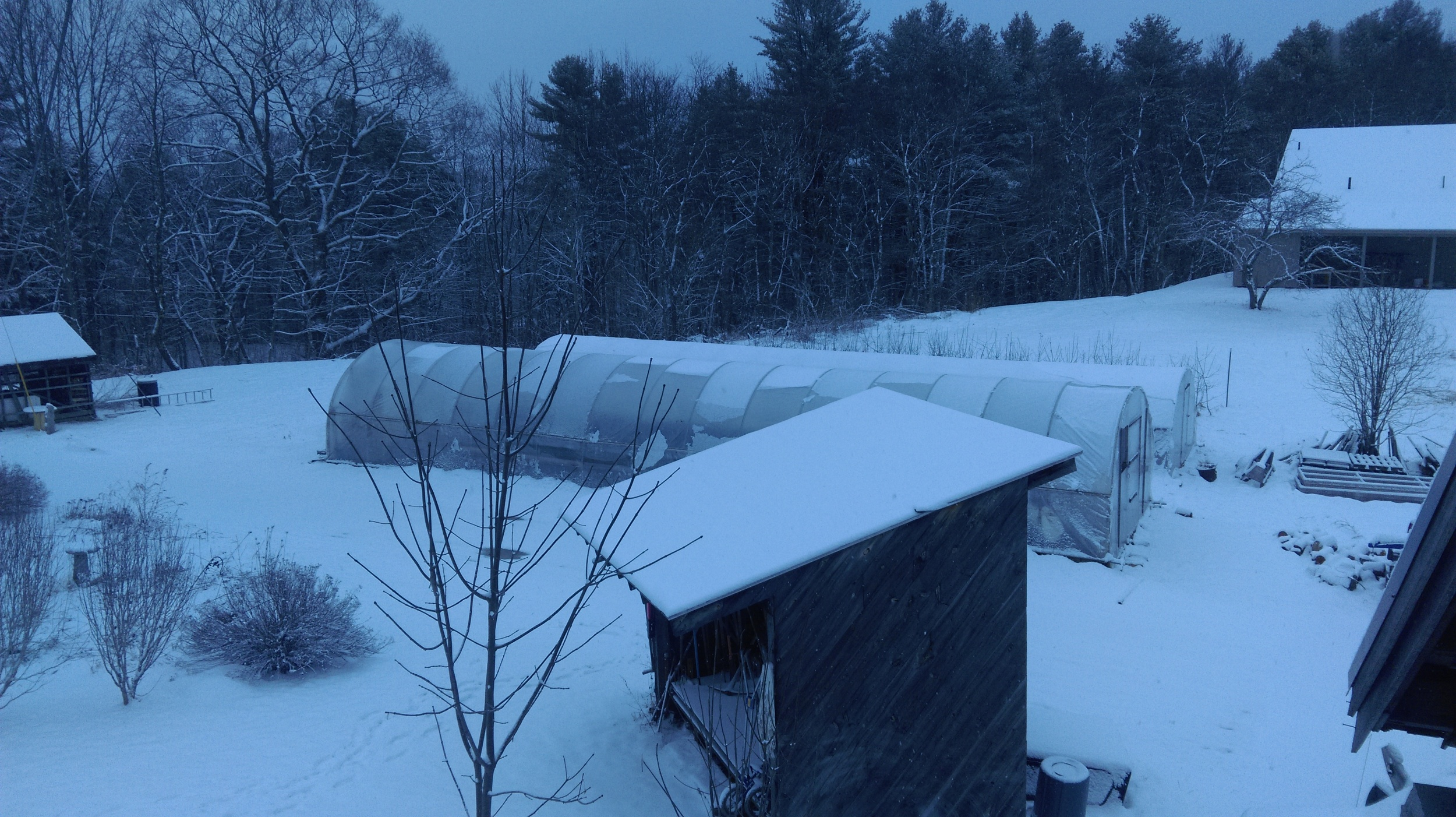 A lovely spring morning. See how the propagation greenhouse, which is heated, is shedding the snow, while the high tunnel beyond it is not.
