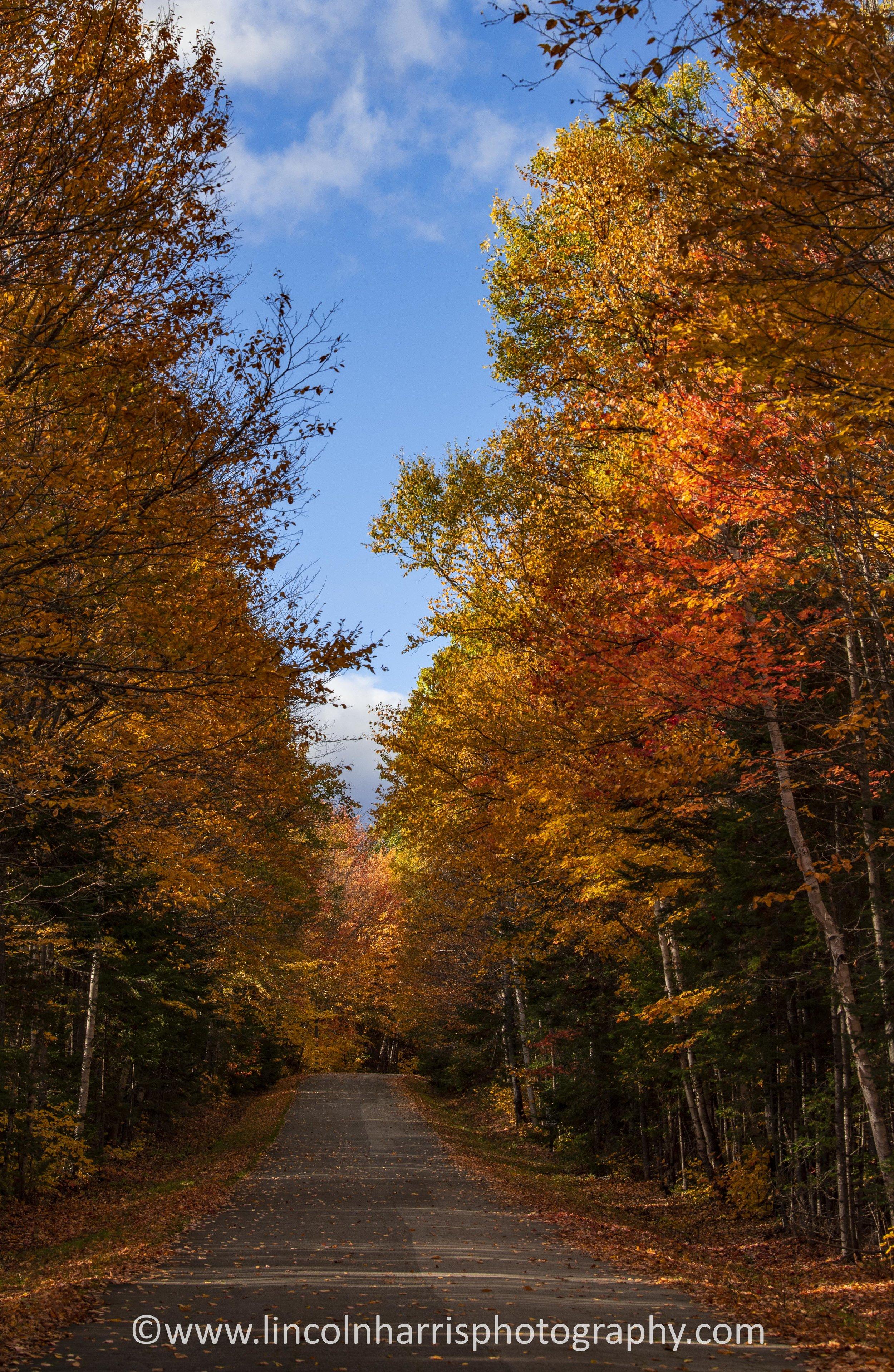 Fall Foliage Maine 41.jpg