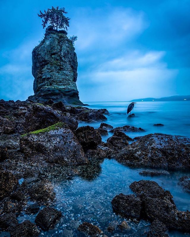 Hanging out my new heron friend at Siwash Rock or Slhxi7ish last night. Long walk to get here and when I arrived the rain started bucketing down. I got lucky though as it ended up only being a shower which gave me an hour or so to shoot. There wasn't a beautiful sunset unfortunately but a stoic heron landed in, bore the weather conditions and blue hour was pretty nice 😊 . . . #seawall #sunset #Slhxi7ish  #siwashrock #stanleypark #squamish #bluehour #hellobc #vancouver #vancitybuzz #vancouverisawesome #dailyhivevan #explorebc #canada #nikoncanada #vancouversun #pnw #greatnorthcollective #beautifulbc #narcityvan #vancityfeature #beautifuldestinations #insidecanada #imagesofcanada #vancouvercanada #BvSquad #heron #vancitybuzz #igvancouver